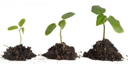 groeiendePlant
